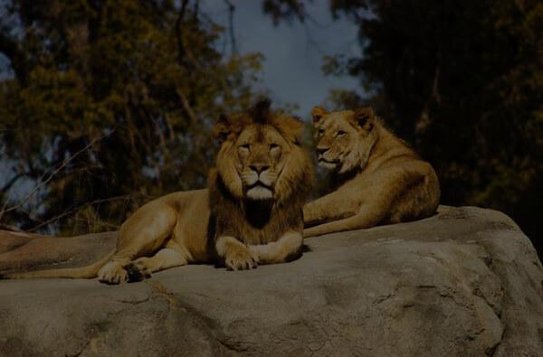 Zoological